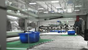 Mushroom production. Production line packs containers with mushrooms. Blue containers move along the conveyor. Organic stock video