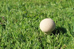 Mushroom - puff-ball Royalty Free Stock Photos