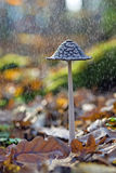 Mushroom in rain Stock Image