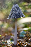 Mushroom in rain Royalty Free Stock Photo