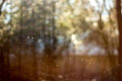 Mushroom rain in April royalty free stock photos
