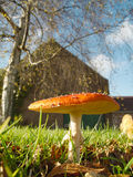 Mushroom with red hat. In front of a house Stock Images