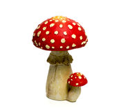 Mushroom red and white. Isolated background stock photography