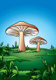 Mushroom roof Stock Photos