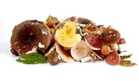 Mushroom russula Stock Photography