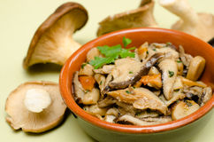 Mushroom salad Royalty Free Stock Photography