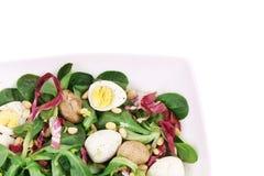 Mushroom salad with pine nuts and radicchio. Royalty Free Stock Photo
