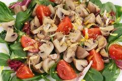 Mushroom salad with tomatoes. Stock Image
