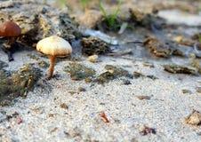 Mushroom in the sand. Spring mushrooms in the sand Stock Photo