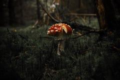 Mushroom season. muhammar. stock image