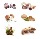 Mushroom - set Royalty Free Stock Photography