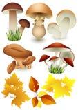 Mushroom_set Stock Images