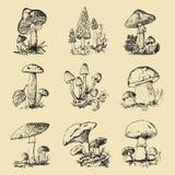 Mushroom set hand drawn engraved. vintage organic vegetarian food. champignon, chanterelles, honey fungus, fly agaric royalty free illustration
