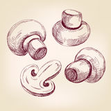 Mushroom set hand drawn vector llustration sketch Stock Images