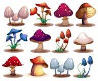 Mushroom set Stock Image