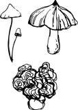 Mushroom set. Vector illustration Stock Photos