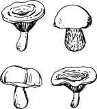 Mushroom set. Vector illustration Stock Images