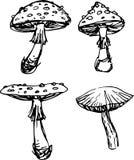 Mushroom set. Vector illustration Royalty Free Stock Photo