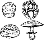Mushroom set. Vector illustration Royalty Free Stock Image