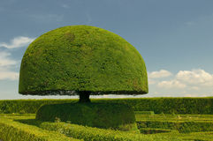 Mushroom shaped tree Royalty Free Stock Photos