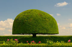 Mushroom shaped tree Royalty Free Stock Photo