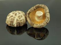 Mushroom - Shiitake Royalty Free Stock Images
