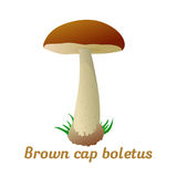 Mushroom single object. Mushroom brown cup boletus single object. Autumn, fallen leaves of trees, dry grass. Mushroom badges, labels, brochures, business vector illustration