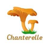 Mushroom single object. Mushroom chanterelle single object. Autumn, fallen leaves of trees, dry grass. Mushroom badges, labels, brochures, business templates vector illustration