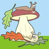Mushroom and slug Stock Photos
