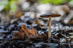 Mushroom in soft  focus Royalty Free Stock Photo