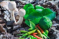Mushroom soup tomyam ingredients. Mushroom soup tomyam ingredients in forest Royalty Free Stock Photography