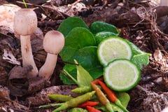 Mushroom soup tomyam ingredients. In forest Royalty Free Stock Photo
