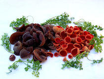 Mushroom still life with brown and red mushrooms Stock Photo