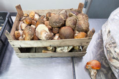Mushroom storage Stock Photos