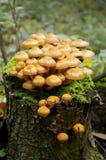 Mushroom on stub Stock Image