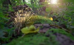 Mushroom on stub Stock Images
