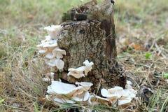 Mushroom at a stump. Stump and mushroom stock photography
