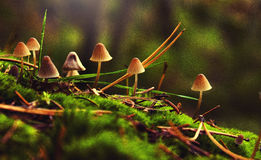 Mushroom in the summer forest with other mushrooms Stock Photography