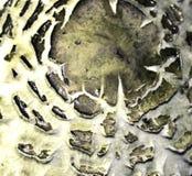 Mushroom texture Stock Images