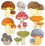 Mushroom theme collection  Royalty Free Stock Photography