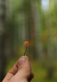 Mushroom on a thin stalk in his hand Royalty Free Stock Image
