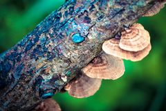 Mushroom on the timber stock image