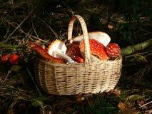 Mushroom time Royalty Free Stock Photography