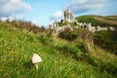 Mushroom on the top of hill scene. Mushroom on the top of hill scene represent natural and plant concept idea Royalty Free Stock Photos