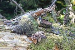 Mushroom on tree. A mushroom, bark on a tree Royalty Free Stock Photo