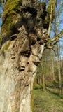 Mushroom tree stock images