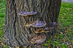 Mushroom on a tree Stock Photos