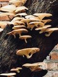 Mushroom tree Stock Image