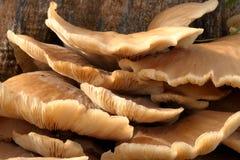 Mushroom Tree Stump Stock Photo
