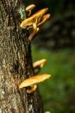 Mushroom in the tree Royalty Free Stock Photography